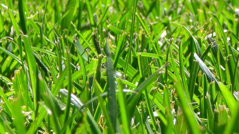 how to kill grab grass in your lawn