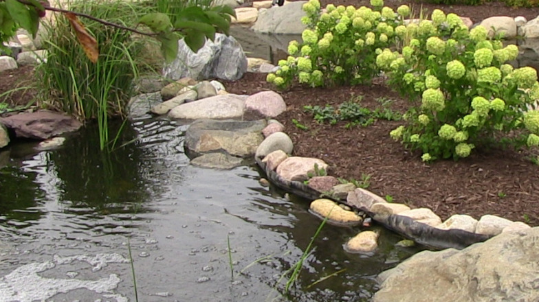 caring for a koi pond